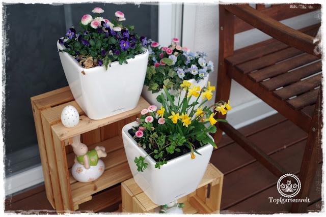 Gartenblog Topfgartenwelt Topfgarten + DIY mit Knagglig (Kiste) und Töpfen viel Platz auf kleinem Raum schaffen - Blumendeko mit Hornveilchen und Bellis passend für den Frühling und Ostern: Topfgarten für den Frühling