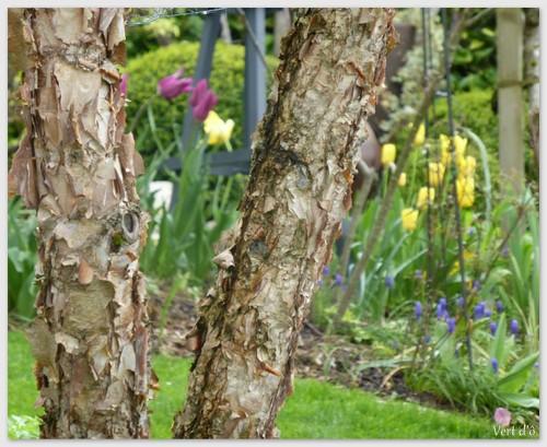 Vert d 39 le jardin des grandes vignes se r veille - Le jardin des grandes vignes ...