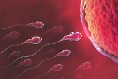 Pengertian Spermatogenesis dalam Sistem Reproduksi pada Manusia