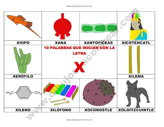 10 palabras u objetos que inician con la letra X