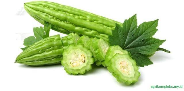 merupakan tanaman sayuran setahun atau tahunan Cara Budidaya Sayuran Pare