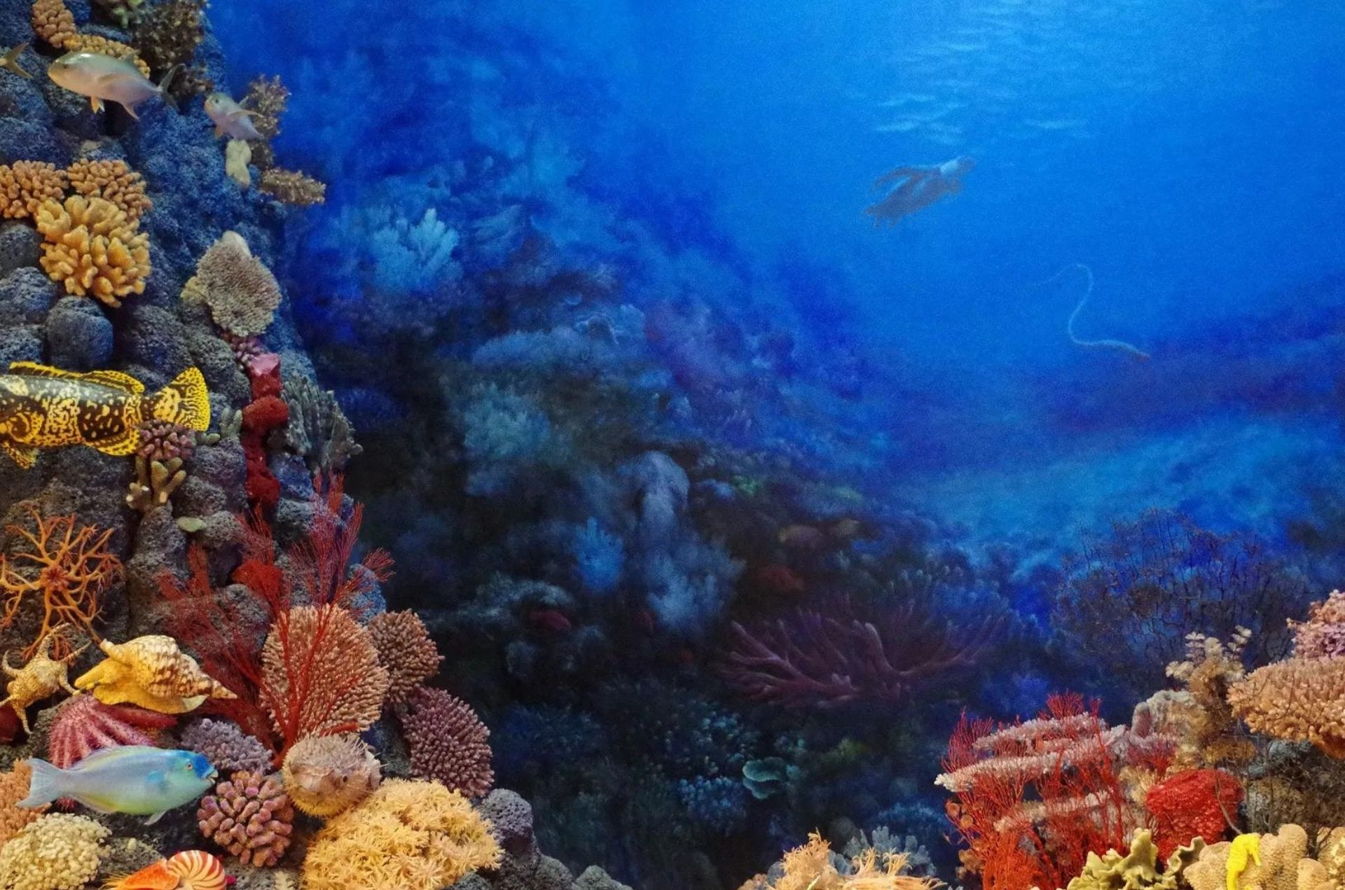 Biodiversidade: Água de lastro e a questão da Bioinvasão nos mares