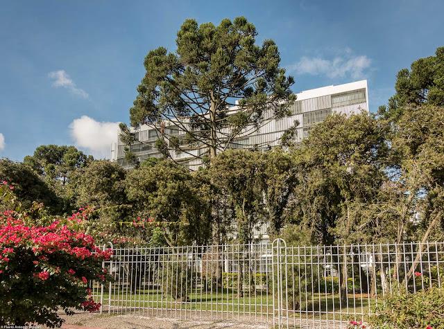 Um belo pinheiro junto ao Tribunal de Justiça do Estado do Paraná.