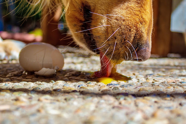 Different Diets for Dogs -What is the Most Natural Diet for a Dog