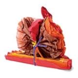 Tissue Paper Turkey - Step 9