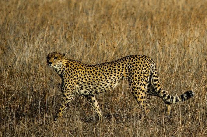Animals facts - Wild Animal  in hindi  [जानवरो के बारे में रोचक तथ्य]