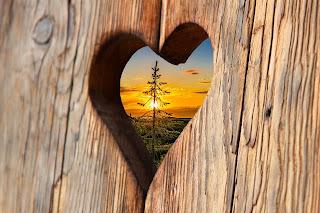 heart sape in wood whatsapp dp image hd