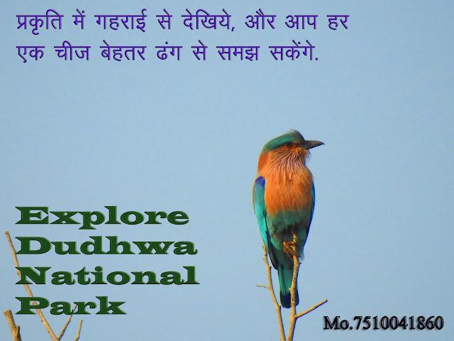 Dudhwa National Park Safari Contact Number, dudhwa national park contact details