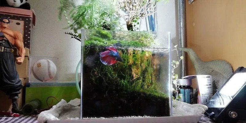 Image The New Fuss About Betta Fish Light