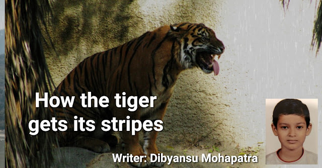 How the tiger gets its stripes