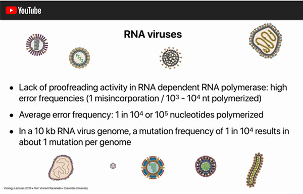 Viral mutation rate for RNA based viruses as seen by Columbia Professor of Virology (Source: Vincent Racaniello)