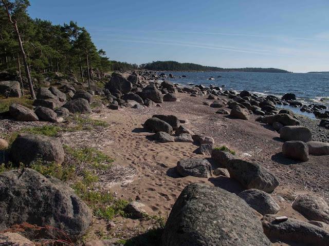 saaren ranta, erikokoisia kiviä, hiekkaa, mäntymetsää