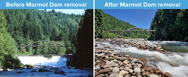 Hình phá dỡ đập Marmot Dam trên sông Sandy, hình trước khi phá và sau khi phá đập