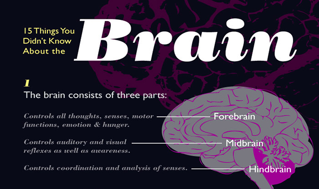 15 Things You Didn't Know About the Brain #infographic