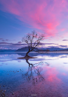 Lake Wanaka, New Zealand, NZ, Otago, Sunrise, That Wanaka Tree