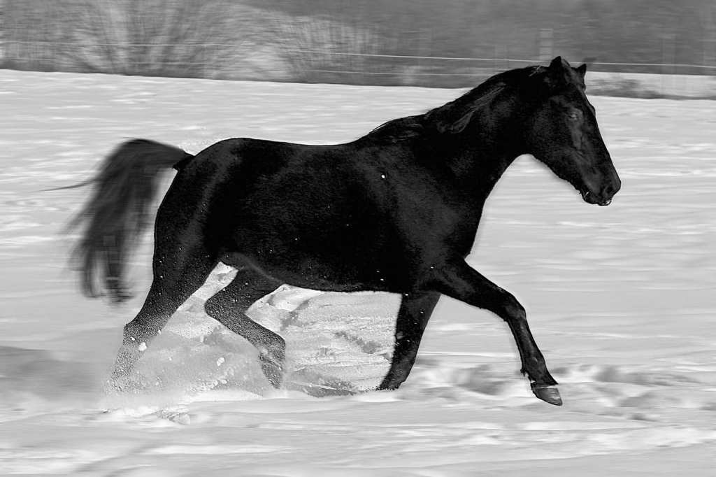Horse Facts: How a Horse Eats, Sleeps, Communicates and Lives