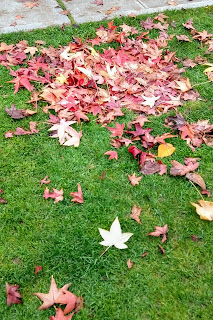 Washington leaves, Thanksgiving weekend