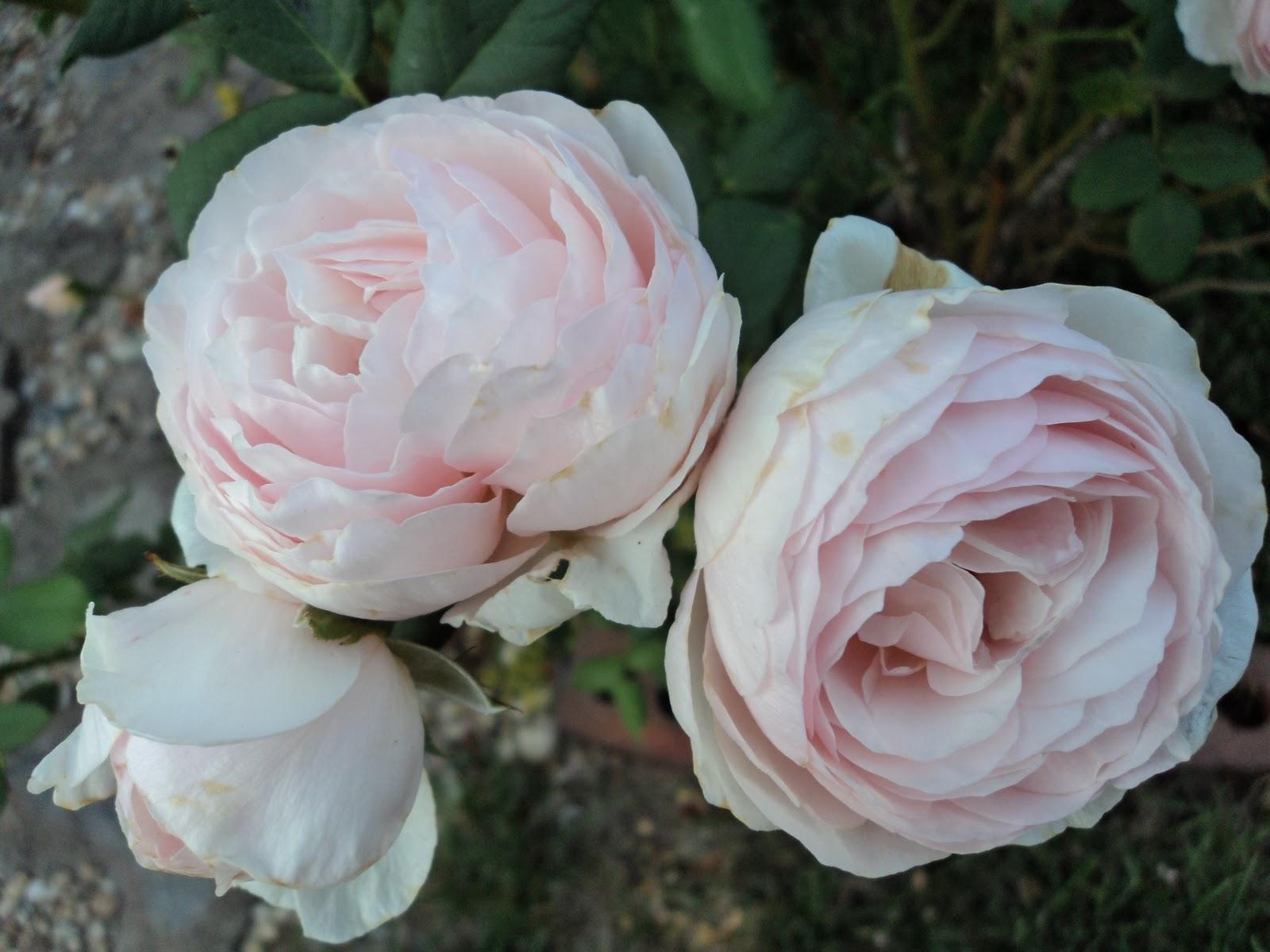 Stephanie Knipper Garden Pictures