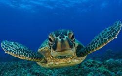 Migliori sfondi desktop con pesci tropicali fondali for Sfondi pesci tropicali