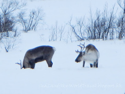 Kiruna guidetur, snowmobile, high mountain tour, scenery