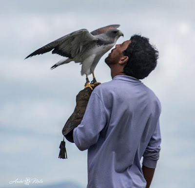 Foto divulgação do Parque dos Falcões - Matéria Parque dos Falcões - BLOG LUGARES DE MEMÓRIA