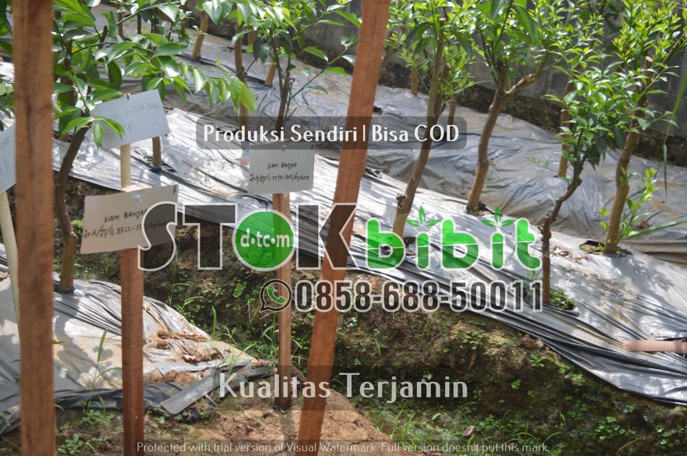 Hijaukan Kota Surabaya       Berkwalitas     berkualitas