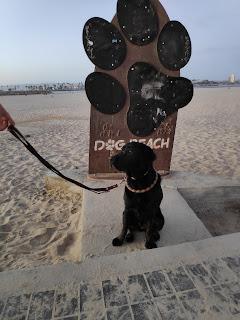 Leia en dog beach