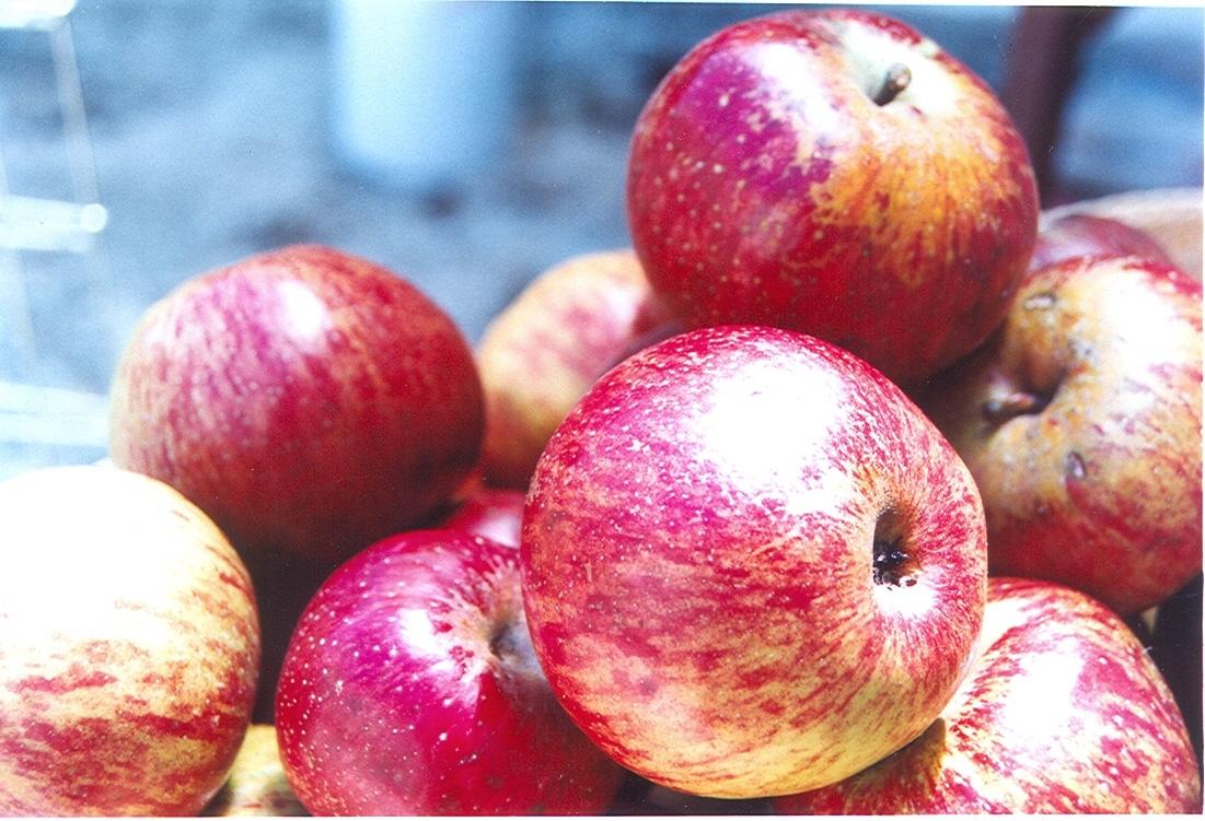 La verdadera historia de la manzana