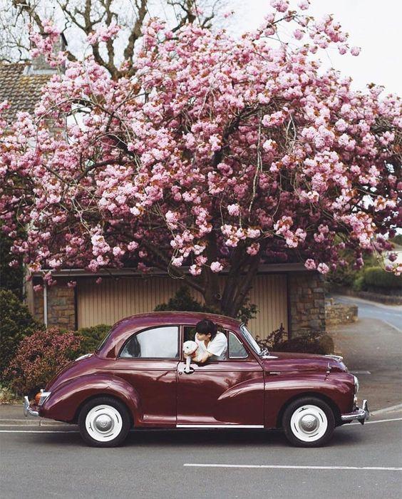 *Car Buying: New vs Used