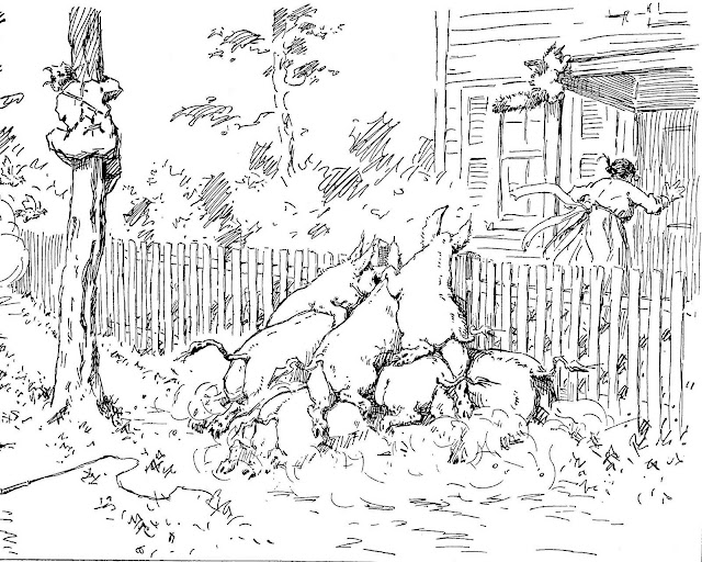 an A.B. Frost illustration of hogs chasing a woman