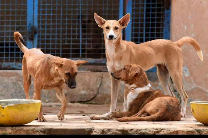 """""""Street Dogs have the Right to Food, and Citizens have the right to feed them without impinging upon the rights of others"""" : Delhi High Court"""