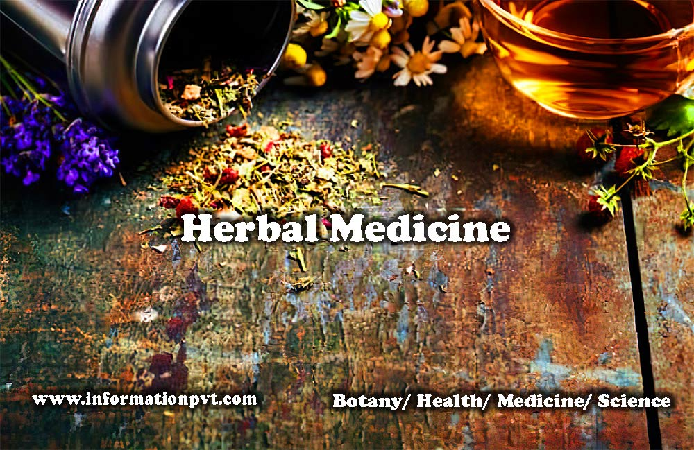 Basic Concept of Herbal Medicine