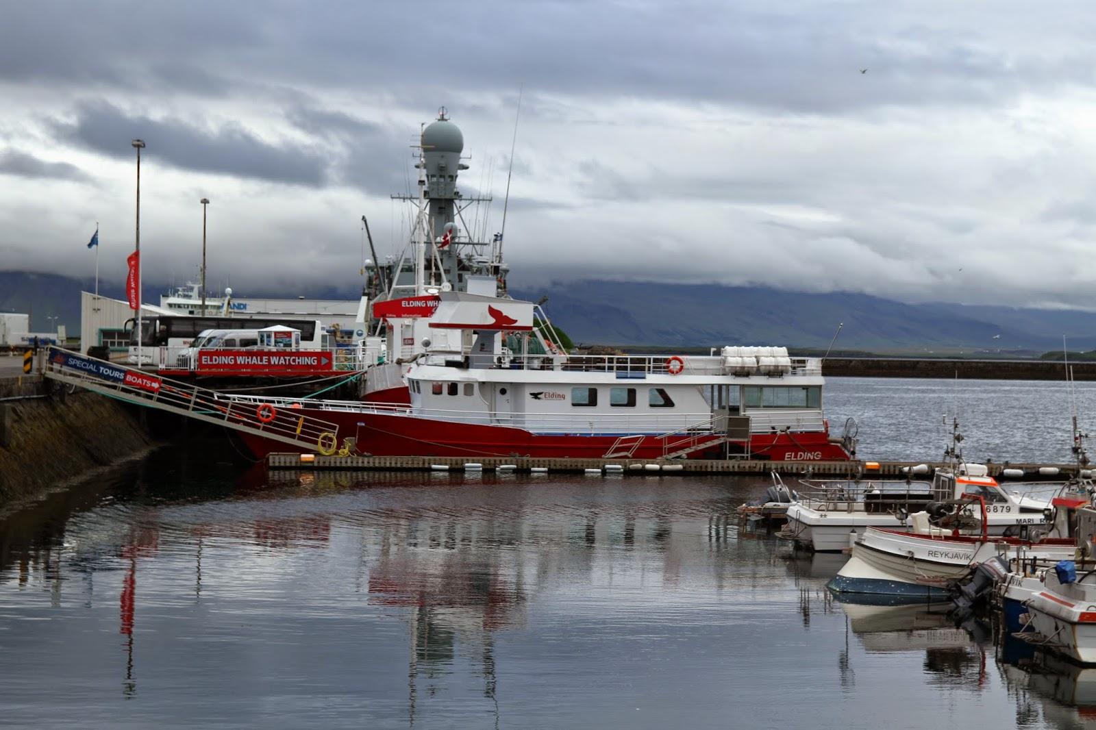 OBSERVAR BALEIAS EM REYKJAVIK, o local mais acessível do mundo | Islândia