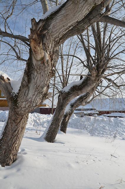 Зимние прогулки по Лысьве