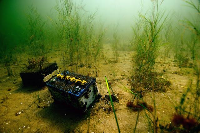 Kirkasvetinen hiekkapohja, jossa kasvaa siellä täällä vesikasveja. Pohjalla on myös sinne kuulumattomia esineitä, muun muassa akku.