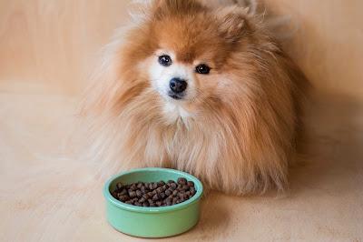 ¿Cómo come un cachorro?