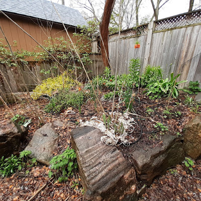 Toronto Riverdale Back Garden Spring Cleanup Before by Paul Jung--a Toronto Organic Gardener