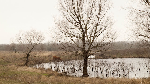 Austin to Houston drive: Barren tree and small lake in Texas in winter