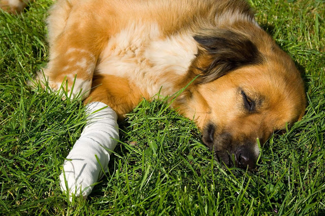 Why is My Dog Limping? Causes and Solutions
