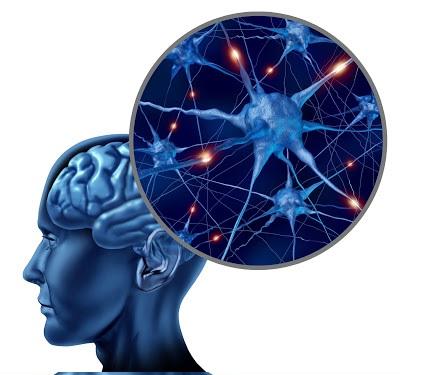 Il glutammato nel cervello ha qualità inaspettate, i ricercatori dimostrano con un nuovo metodo di analisi