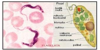 Mastigophora