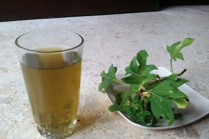 The Insulin Leaf - Herbal Remedy for Diabetes Patients