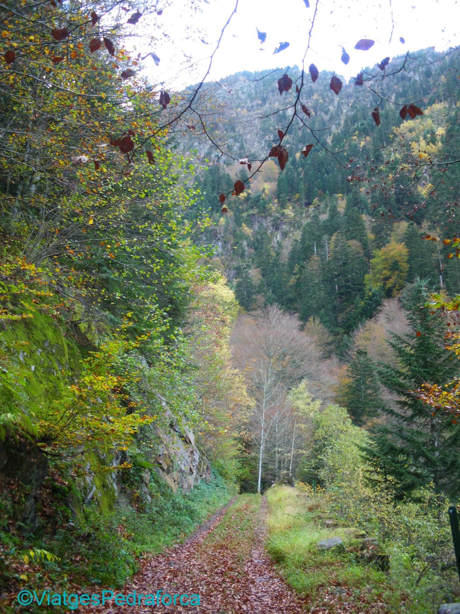 Val d'Aran, Pirineu de Lleida, fagedes, colors de tardor, senderisme per Catalunya