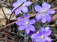 Ślady wiosny