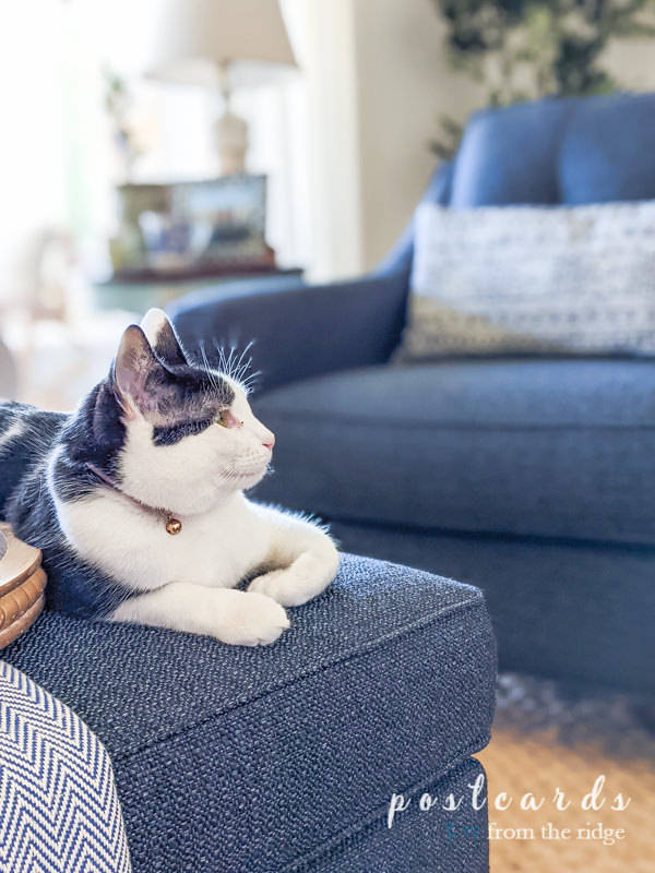 black and white kitty on textured indigo ottoman from Rooms To Go