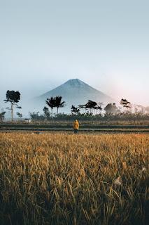 Online earn in Indonesia