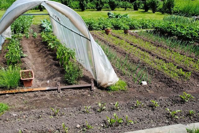 Aiatunnel ja aiamaa