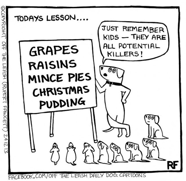 © 2020, Rupert Fawcett, Off The Leash Used by Permission