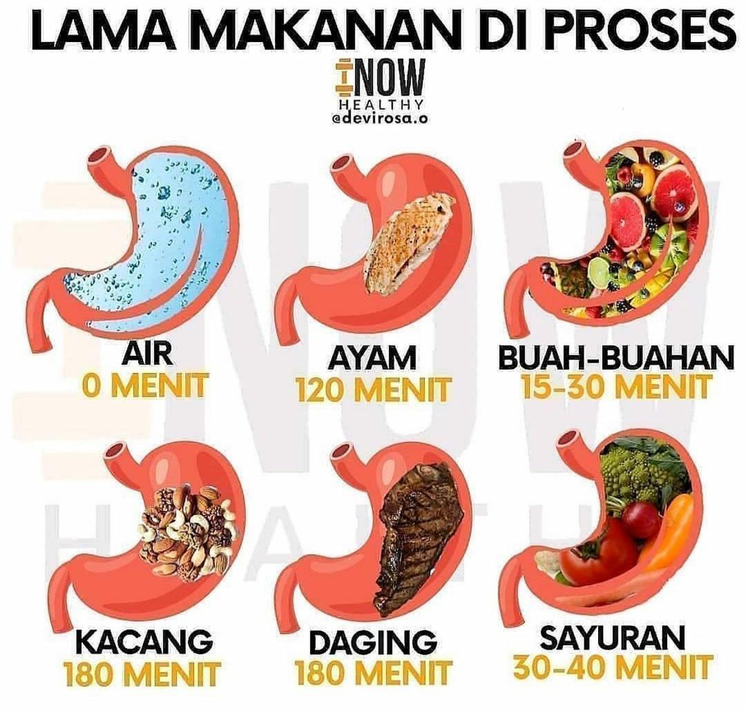 Berapa Lamakah Makanan Boleh Hadam?