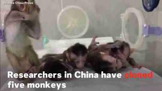 Macacos - Clones Modelos Transgênicos